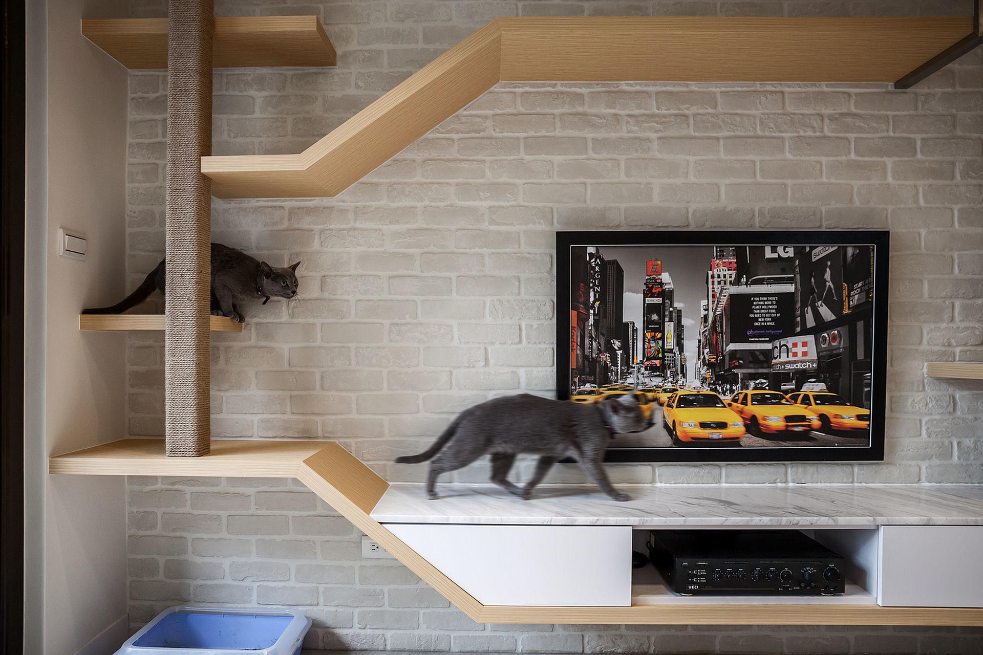 貓咪與我的三度空間--共融-pic2