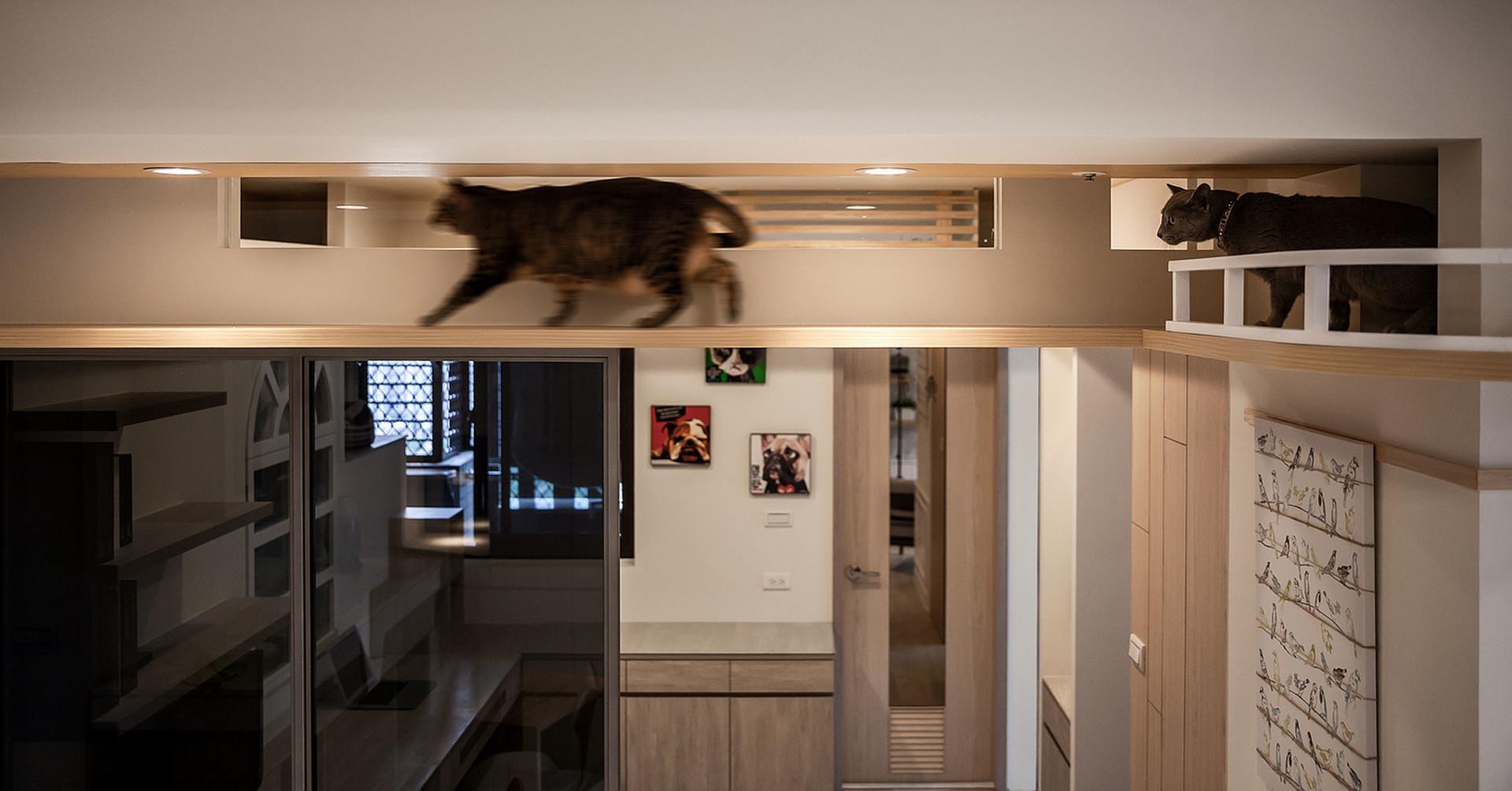 貓咪與我的三度空間--共融-pic4